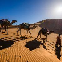 man leading three camels through desert