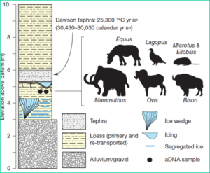 figure from Nature article showing stratum where the microbe DNA came from