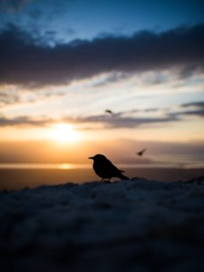 silhouette of bird against sunset