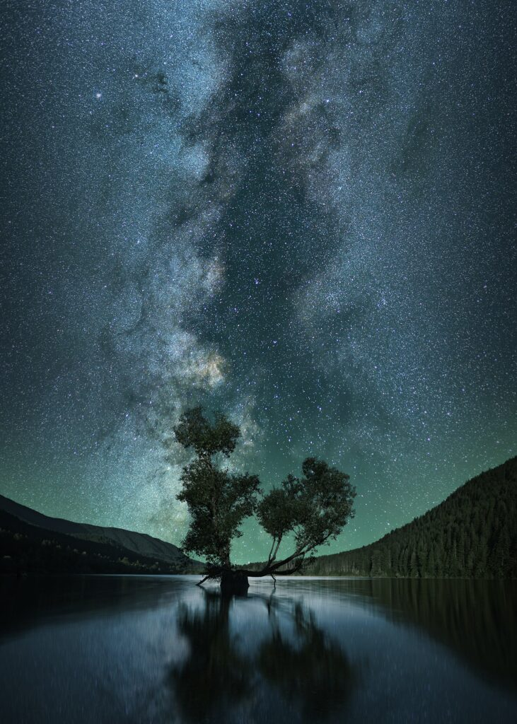tree against night sky background