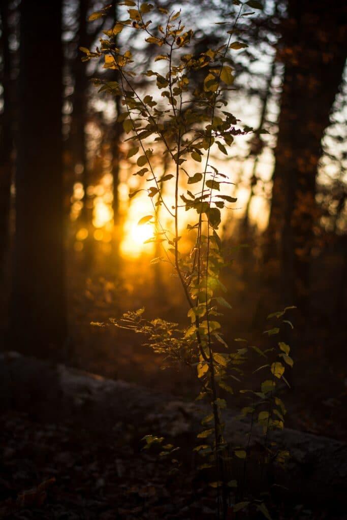 photo of sunrise through trees
