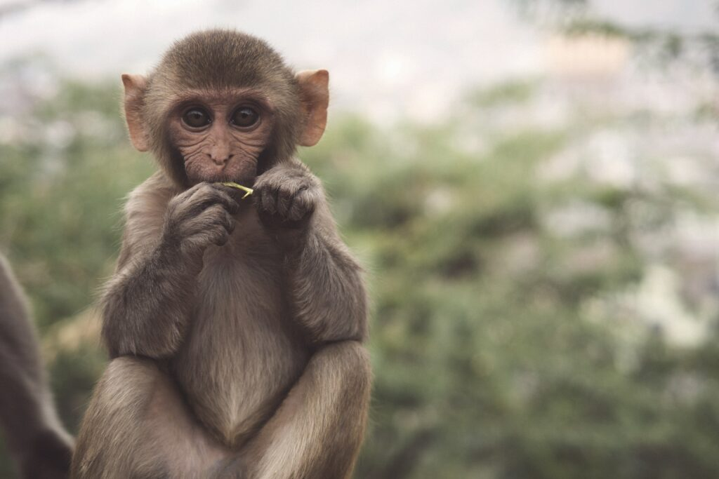 monkey holding and examining a seed